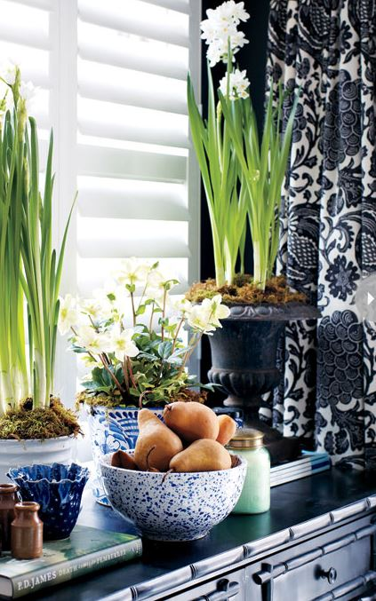 decor vignette with black and white print drapery and urns of paperwhites